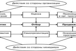 Схема взаимодействия организации и менеджера в процессе управления его карьерой
